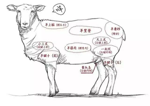 下雪天就想吃铜锅涮羊肉,平顶山这家大草原生态羊,陪你来过冬!插图2