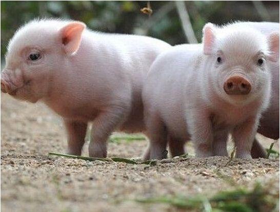 雨润股票每股净资产,猪价大涨猪肉消费低迷,妥协的雨润食品(01068)上半年还是亏