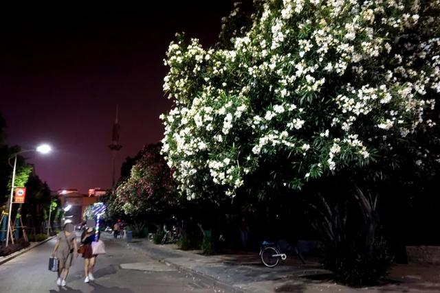 「游园夜景醉游人」晚上8点以后的工人文化宫,美爆了插图12