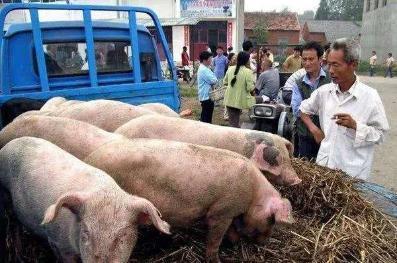 7月21日猪价、肉价:年内猪肉降到15~20元可能性大吗?你怎么看?-今日股票_股票分析_股票吧