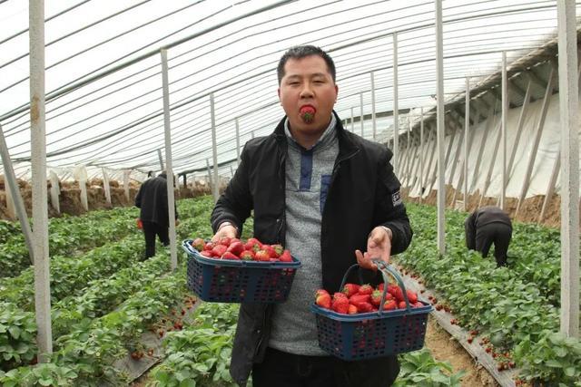 平顶山周边这座山太率性,假期还能摘草莓,前100名免费送!插图8