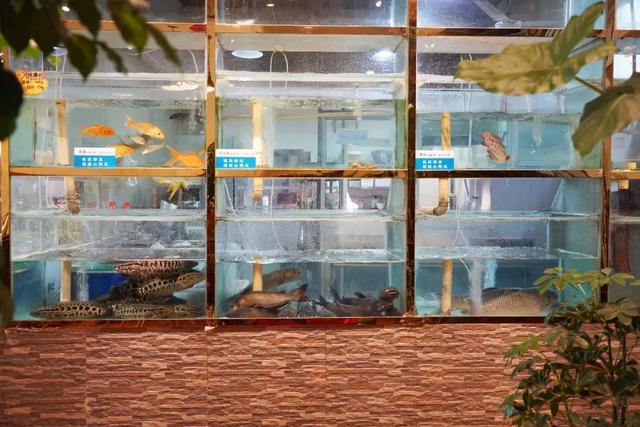 """平顶山这家火锅店,藏了一条广东的""""桑拿鱼"""",90%的工资它而来插图3"""