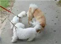 捆绑股绳长度,狗狗的牵引绳子要多长合适呢?