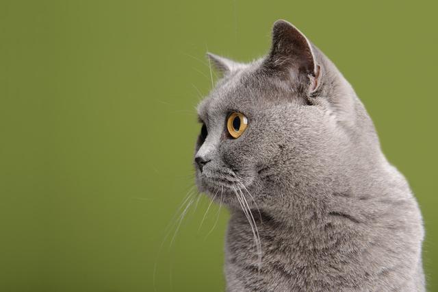 一本万利的买卖:我业余养猫赚了10倍的钱,聊聊副业做猫舍该怎么赚钱