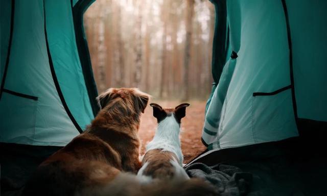 野營露營,13款你也不知道的露營帳篷款式