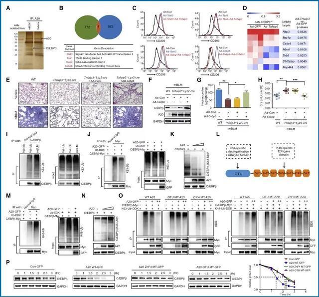 欧易生物,基因芯片,生物芯片,基因测序,高通量测序,二代测序,三代测序,酵母文库,生物信息学,转录组,基因组,蛋白质组,甲基化,代谢组学,蛋白检测单细胞测序,核体系酵母文库构建,基因组de novo测序,蛋白质组定量分析,靶向代谢组学, 2b-RAD简化基因组 ,微生物多样性测序