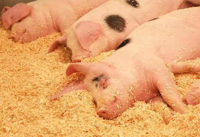 河南首富又乐了:半年卖了678万头生猪,净赚108亿-今日股票_股票分析_股票吧