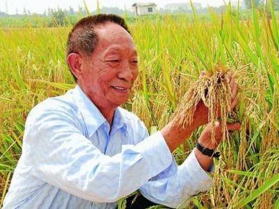水稻之父专家教授:干啥不行,种地第一名!顺便还另附了水稻之