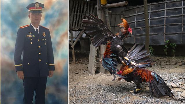 人吃鸡、鸡杀人?菲律宾一警察被斗鸡杀死,只因人性是邪恶的