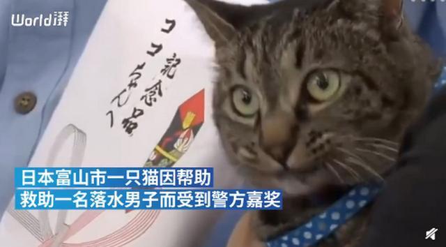 日本家猫协助救下落水男子获警方嘉奖,网友:你是不是黑猫警长?-第1张
