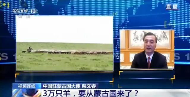 3万只羊到中国秒变羊肉 蒙古国:希望献给湖北人民-今日股票_股票分析_股票吧