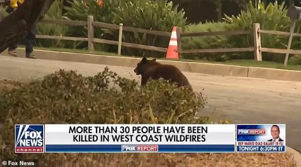 美国女记者正直播,一只熊飞奔而来,结局出人意料-第3张