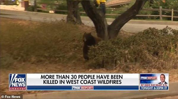 美国女记者正直播,一只熊飞奔而来,结局出人意料-第5张