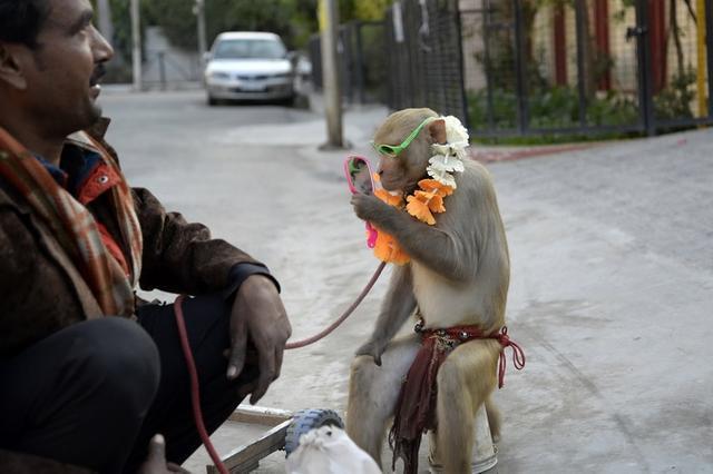 """印度35只猴子打群架撞塌民房,致2人死亡,猴子已非首次""""杀人"""""""