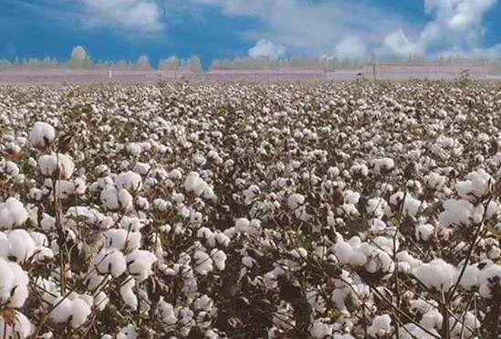 澳大利亚又向中国提要求了,这次是棉花……