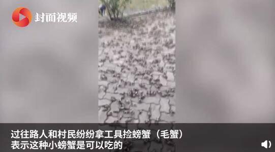 密恐慎入!上万只螃蟹上岸引村民捡拾 当地居民:20年没见过这景象 全球新闻风头榜 第3张
