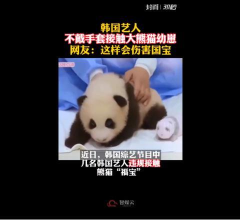 韩女团BlackPink不戴手套摸熊猫幼崽,中国大熊猫研究中心:正调查处理 全球新闻风头榜 第1张