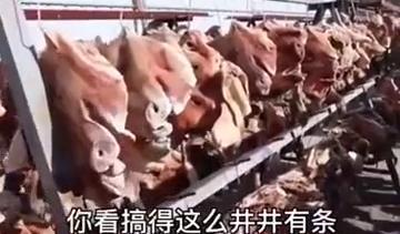 院子挂满4000个咸猪头,主人:一个能卖220,想给孩子更好的生活 全球新闻风头榜 第4张