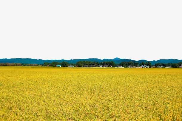 好米仓,三人小公司如何做到一年线上销售2000万元优质大米?