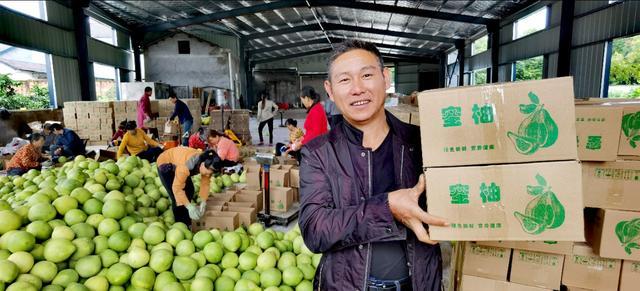 湖北枝江泥土香蜜柚吃香,一农民一天卖出1.6万单,回款15万