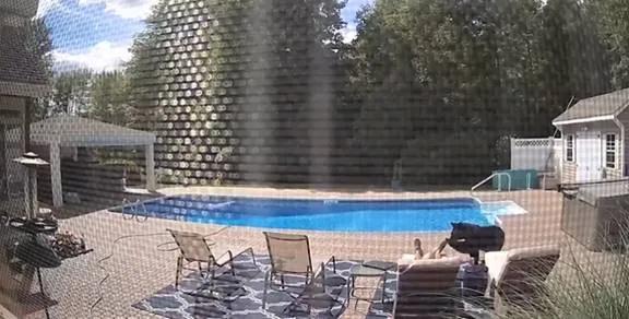 视频疯传!美国男子在自家别墅泳池旁睡觉 竟被一头黑熊一掌拍醒-第4张