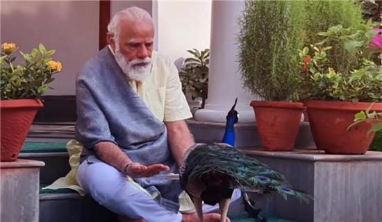 莫迪被损了!反对党喊话印度民众:学会自救吧,总理正忙着喂孔雀-第1张