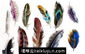逼真手绘鸟羽毛矢量设计素材模板Vector set of detailed bird feathers