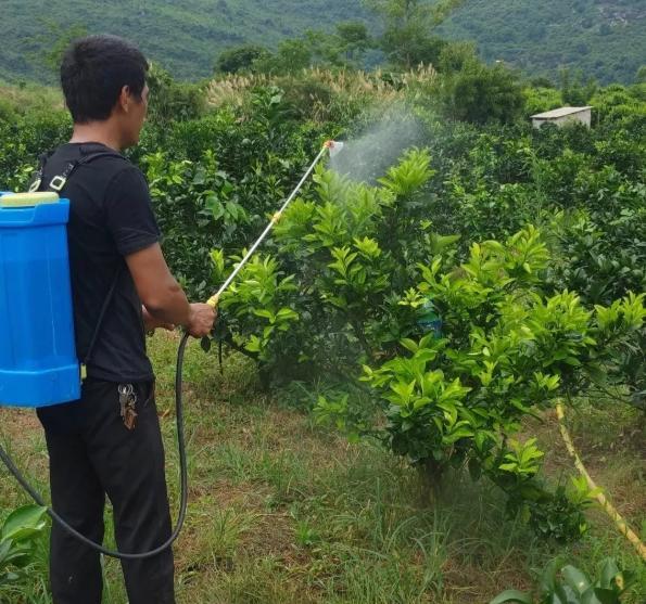 永春碳基营养肥的施肥方法要记牢