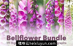 风铃草/桔梗花卉超清照片合集 Bellflower – Flower Bundle!