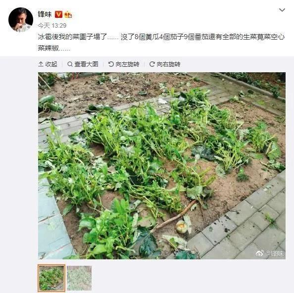 谢霆锋的菜园子塌了 一片狼藉 和王菲的幸福生活曝光