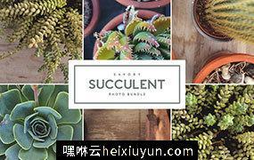 仙人掌&多肉盆栽图片素材合辑 Savory_Succulent_Photo_Bundle #1903036