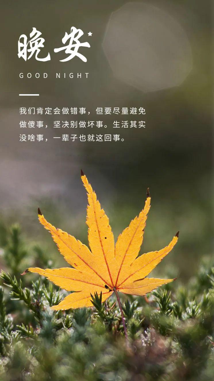 早安心语情感句子:温柔仅供参考,一切以生气时间为标准