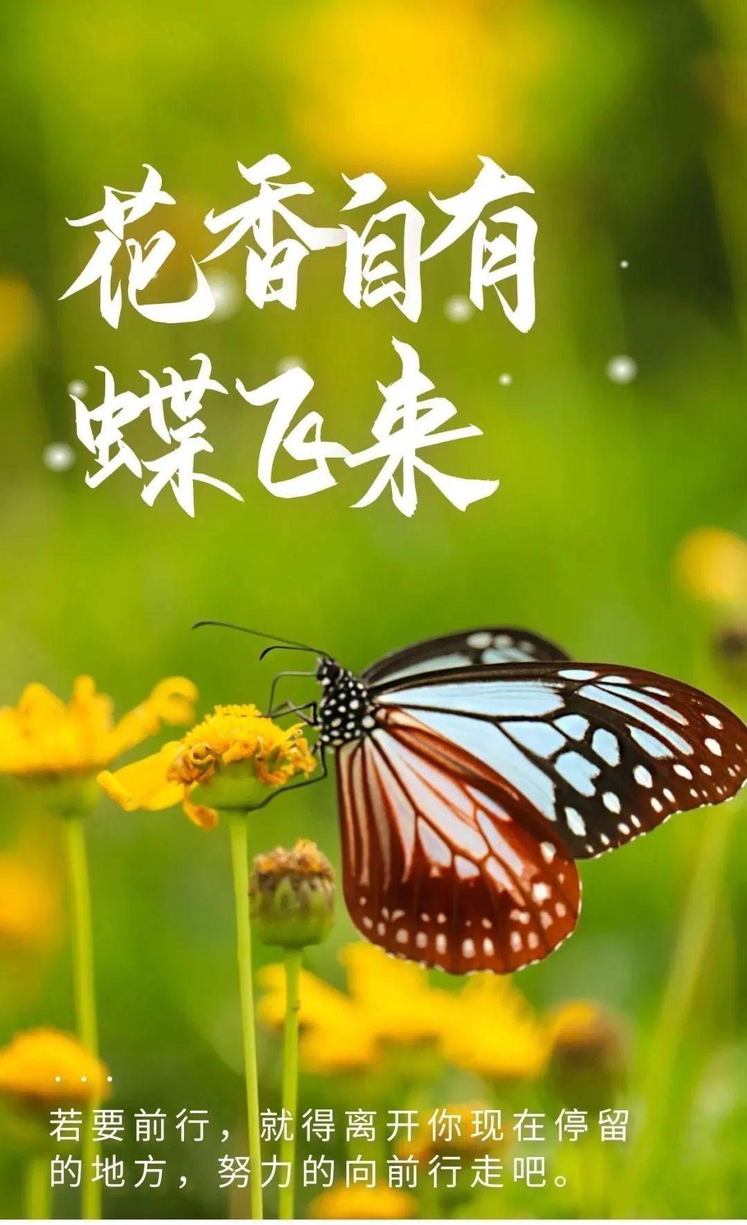 腊月二十八祝福心语正能量阳光图片日签