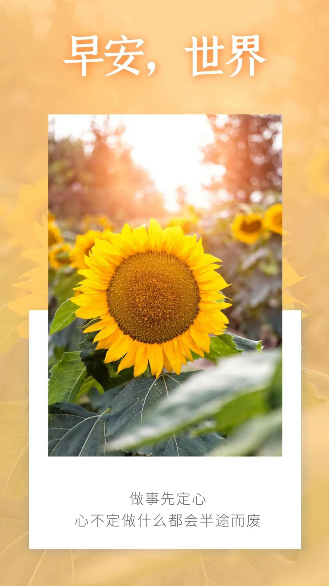 正能量早安图片语录,激励人心的句子,加油