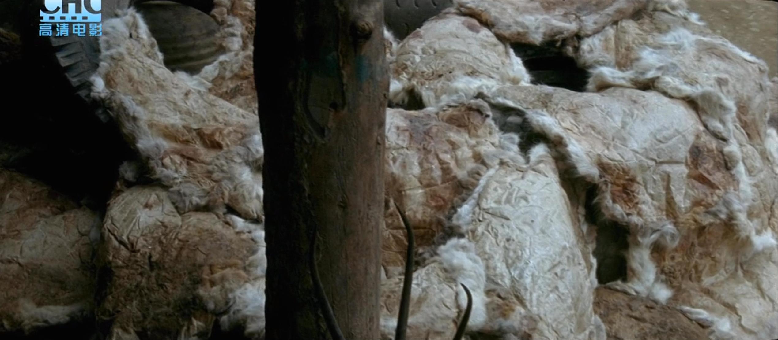 """16年了,这部揭露""""剥皮""""生意的电影还是不敢看第二遍"""